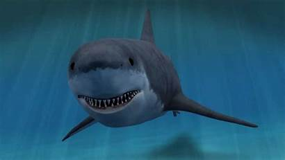 Shark Animated 3d Clipart Animation Magic