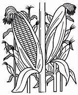 Corn Coloring Field Pages Indian Plant Cornstalk Cornfield Stalk Drawing Vegetables Stalks Fruits Google Printable рисунок Fields Template Drawings Fall sketch template
