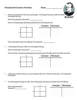 monohybrid cross worksheet genetics worksheets and students