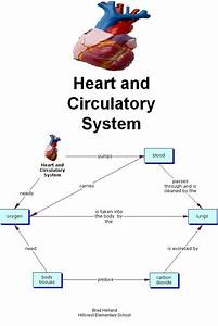 Simple Circulatory System Diagram For Kids