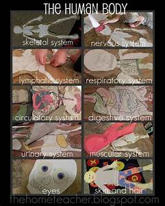 1000  Images About Human Body 5th Grade On Pinterest