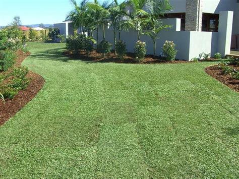 Sir Walter Buffalo Grass Dna Tested Sunshine Coast