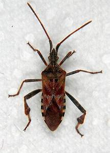 Insecte De Maison : attention au pire insecte les plus complexes de l histoire ~ Melissatoandfro.com Idées de Décoration