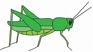 Unique Grasshopper Clipart Design