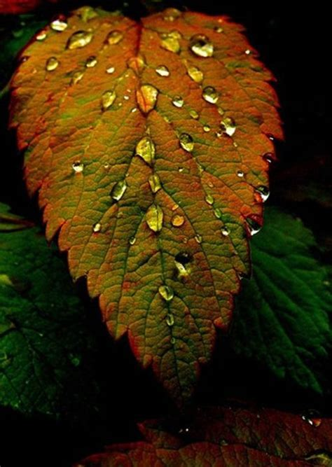 Beautiful Leaves Raindrops
