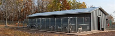 northwoods bird dogs kennel