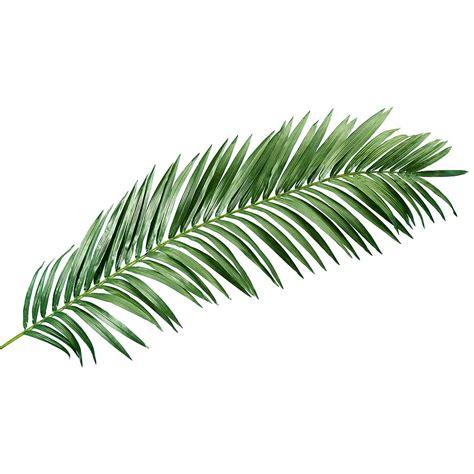 feuille de palmier deco d 233 co palme de palmier g 233 ant d 233 co 240 cm d 233 coration chez decowoerner