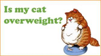 my cat is overweight the overweight cat the shocking uk cat breeders