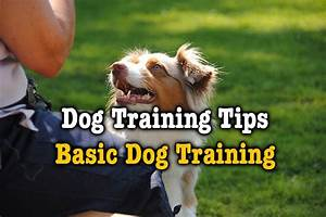 dog training tips basic dog training thinkofpuppy With dog behavior training tips