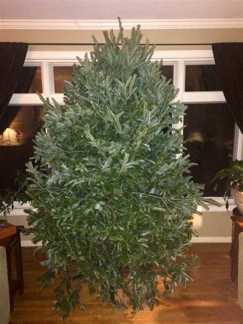 wordless wednesday my crooked christmas tree