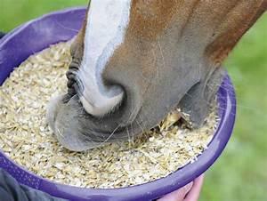 Heu Kaufen Für Pferde : getreide liefert pferden energie bei ~ Orissabook.com Haus und Dekorationen