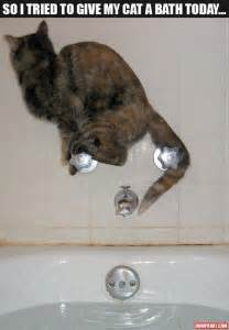 do cats need baths pictures 38 pics