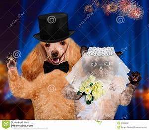 stock photo cat dog wedding groom bride image