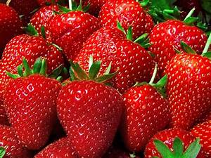 Strawberry Tree Fruit and Its Benefits – BeaBeeInc