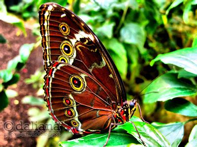 Photographis Butterfly Castle  Schmetterling Haus