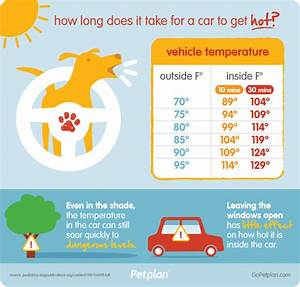 The Dog Days of Summer: Summer Hazards and Your Pet