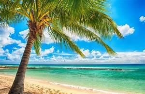 tropical paradise beach palms sea ocean sunshine summer ...