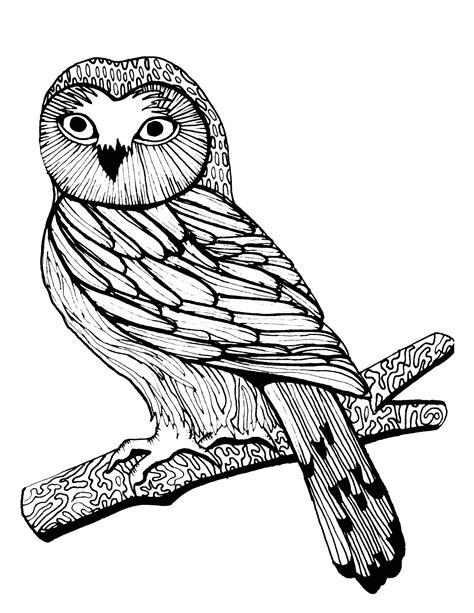 Roofdieren Kleurplaat by Coloring Page Woodland Owl Birds Of Prey Owl