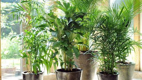 plante verte interieur sans lumiere plante verte interieur peu de lumiere 2 photo de fleur une pensee fleuriste