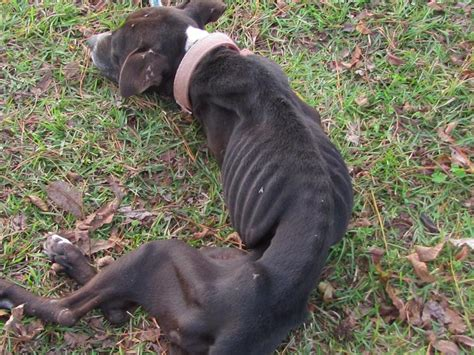 man pleads guilty  animal cruelty  dog cannibalism