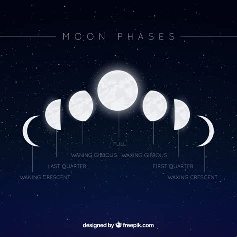Moon Phases Background Starry Background With Moon Phases Vector Free
