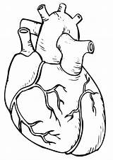 Human Organs Coloring Pages sketch template