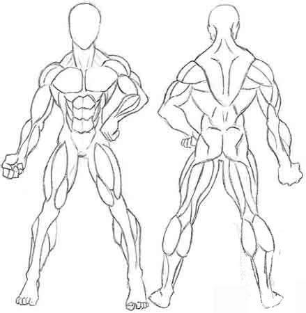 best Dibujos Para Colorear De Los Musculos Del Cuerpo Humano Para ...