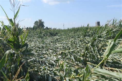 Sauk Valley farmers eligible for federal aid in wake of ...