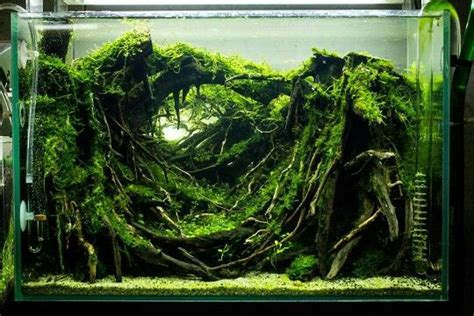 Freshwater Aquascape Ideas by 99 Best Aquascaping Freshwater Meowlogy