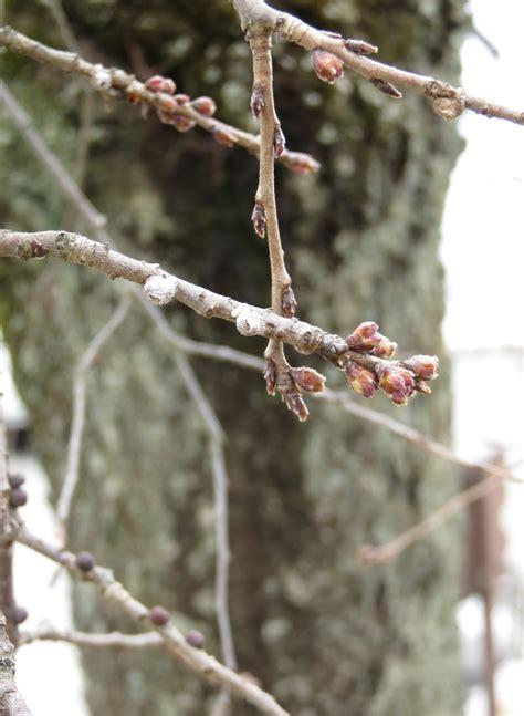 もうすぐ 春 です ね