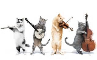 cat kit kit cat quartet cats wallpaper
