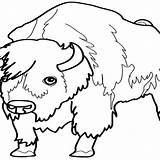 Bison Coloring Animals 1252 Printable Kb Drawings sketch template