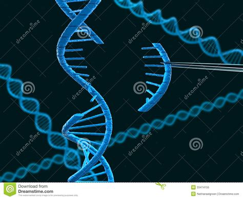 Modification To Dna ap biology my journey learning the science of
