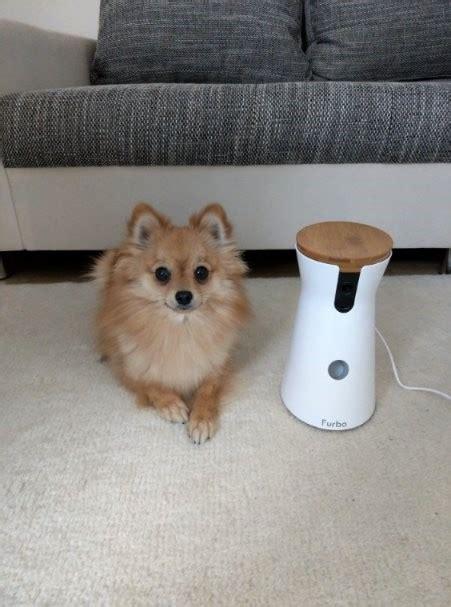 Kühlmatte Hunde Test