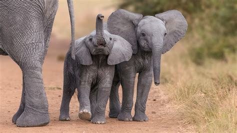 2 Lovely Elephant Child 4K Wallpaper HD Wallpapers