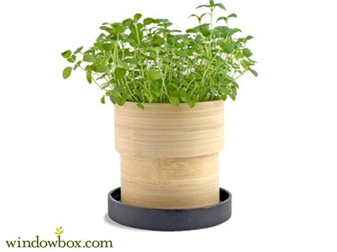oregano seed kit  bamboo container