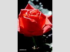 Valentinstagskarte selber ausdrucken gaidaphotos Fotos