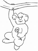 Koala Coloring Pages Hanging Tree Funny Printable Bear Drawing Koalas Climbing Animal Animals Outline Getdrawings Supercoloring Bestcoloringpagesforkids Recommended sketch template