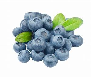 Blueberry Copy | Free Images at Clker.com - vector clip ...
