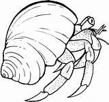 Crab Hermit Coloring Printable sketch template