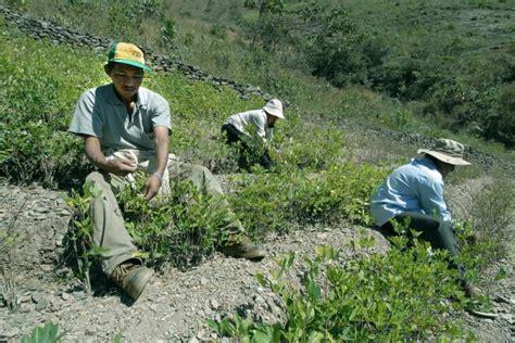 peru declares  fly zone  cocaine producing regions