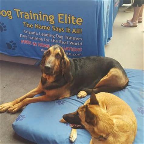 dog training elite    reviews pet training