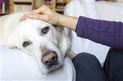 Treating Cushing's Disease in Dogs