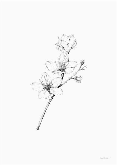 Bloemen - Kersenbloesem | Cherry blossom drawing, Simple