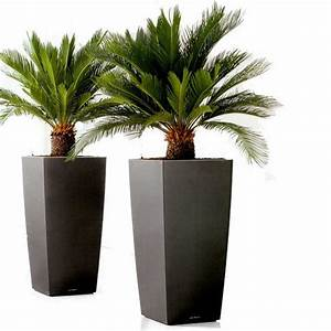 Palme Winterhart Kübel : palmen pflanzen biorhythmuskalender ~ Michelbontemps.com Haus und Dekorationen