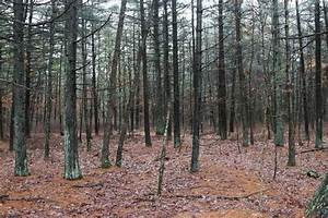 Flyers For Businesses 11 Things Lurking In New Jersey 39 S Forests That Can Kill