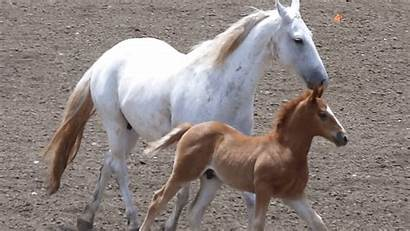 Horse Running Horses Animals Giphy Gifs Animated