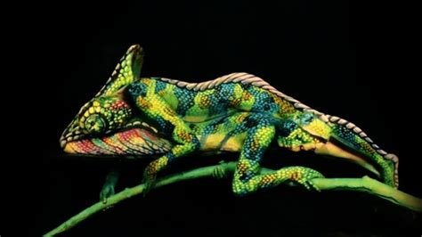 [video] Un Camaleón Creado Por Los Cuerpos Pintados De Dos