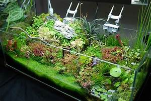 Pflanzen Terrarium Einrichten : emersed aquatic plants with carnivorous plant layout plant physiology emersed culture ~ Orissabook.com Haus und Dekorationen