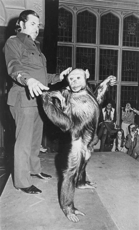 missing link  oliver  alleged human chimp